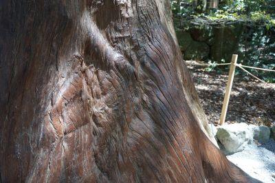 伊勢神宮 巨木
