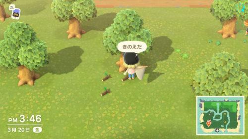 木の枝 集め方
