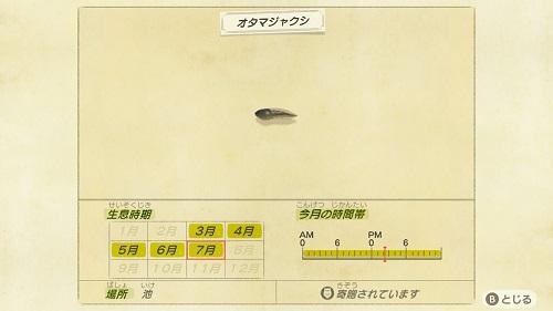あつまれどうぶつの森 魚 7月 オタマジャクシ
