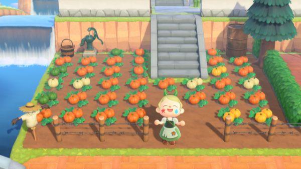 あつ森 かぼちゃのなえ レイジ 入手方法 たぬき商店 カボチャ 色 アップデート アプデ あつまれどうぶつの森